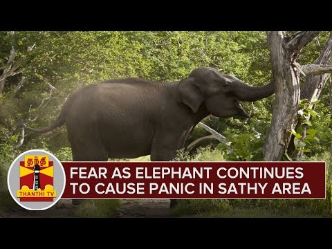 People Fear as Elephant Continues to Cause Panic in Sathyamangalam Area