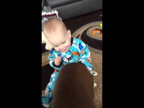 A Love Story: Baby Meets Dog