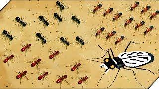 ДВЕ АРМИИ МУРАШЕК - Игра Empires of the Undergrowth (13 серия) Игра про муравьёв.