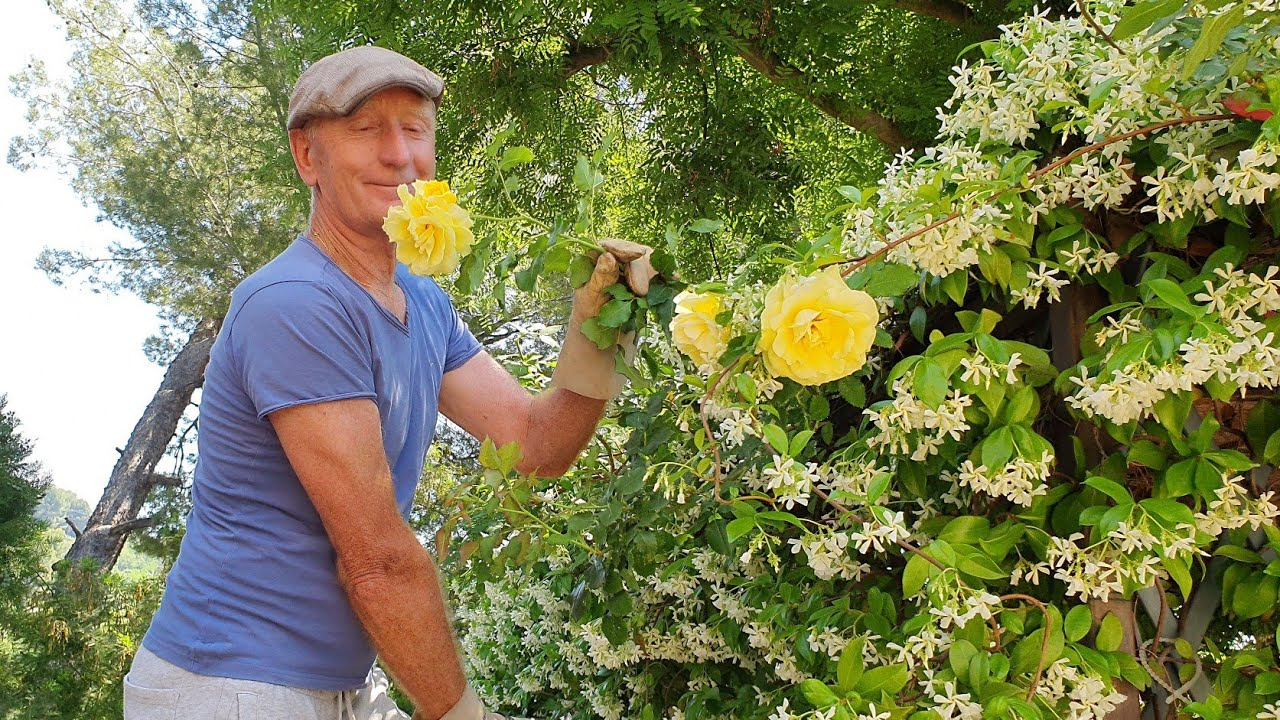 Жасминовое МОРЕ или море ЖАСМИНа и весь мой прекрасный сад, и даже огород/Большой обзор