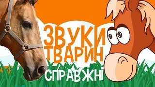 Download ЗВУКИ ТВАРИН для дітей - мультфільми українською мовою. З любов`ю! Mp3 and Videos