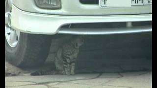 коты и авто