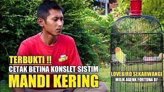 Download lagu MANDI KERING BIKIN LOVEBIRD BETINA CEPAT KONSLET - SEKARWNGI MILIK AGENK FORTUNA BF
