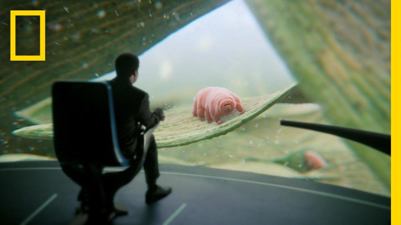 Download Deeper, Deeper, Deeper Still: Inside Look   Cosmos: A Spacetime Odyssey