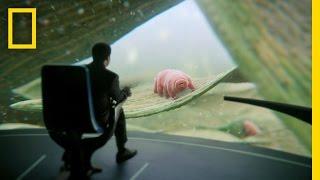 Deeper, Deeper, Deeper Still: Inside Look | Cosmos: A Spacetime Odyssey