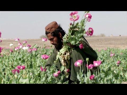 Al Jazeera Svijet: Afganistanski opijum
