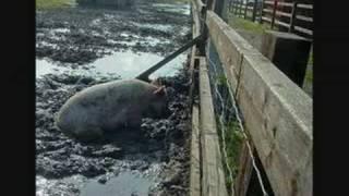 Islam: Why Does Islam Prohibit Pork? - EXPLAINED thumbnail