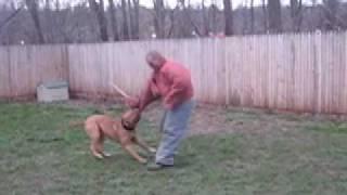 Tito - Ban Dog Protection