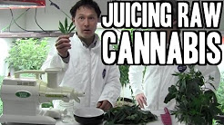 Juicing Raw Cannabis for Highest Health Benefit