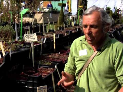 les plantes grasses rustiques youtube. Black Bedroom Furniture Sets. Home Design Ideas