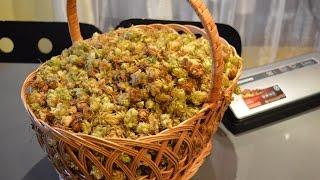 Заготавливаем ХМЕЛЬ для домашнего пива. Вакуумация хмеля.(, 2015-10-09T06:00:00.000Z)