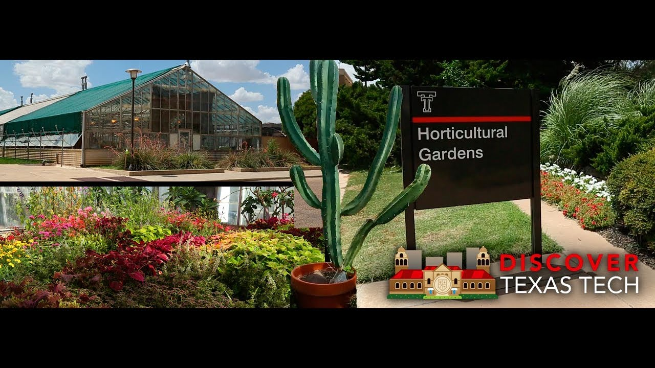 Discover Texas Tech: Horticultural Gardens U0026 Greenhouse Complex
