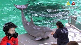 Захватывающее шоу с дельфинами. Dolphin show - Дельфинарий - Delfinarium