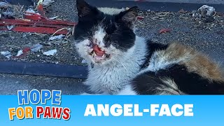 Cat missing part of her face living on the streets!  Thanks to YOU, she has HOPE!