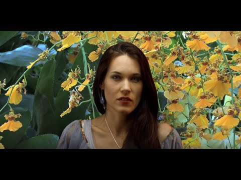 The Negativity Cure - Teal Swan -