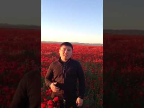 Қазақстан - Родина тюльпанов