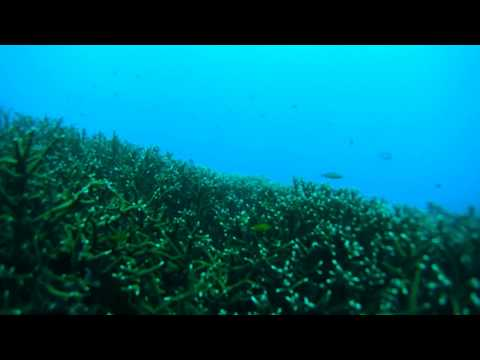 Scuba Diving in Singapore - Sony Action Cam Weekend Warriors HD (caption available)