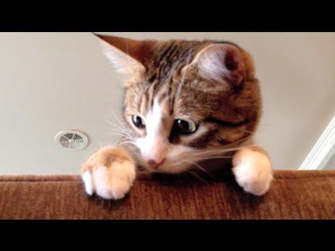 Adele – Hello Cat Parody