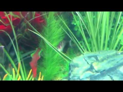 Fixing Micro Bubbles In A Beautiful New Tropical Aquarium