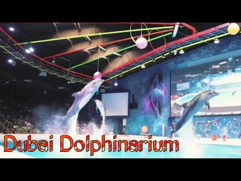 Dubai Dolphinarium | Dolphin Show | Seal Show