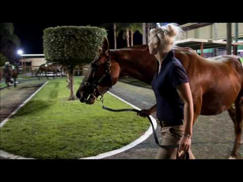 2016 National Weanling Sale Day 2