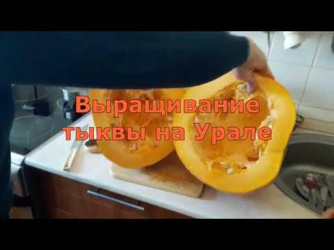Выращивание тыквы на Урале.Пора сеять семена на рассаду!
