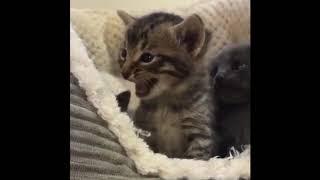Cutest Cats Compilation 2020 | Best Cute Cat Videos Part 3 - I heart cats