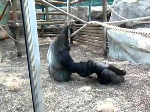 Khỉ cũng ham muốn chuyện ấy =))