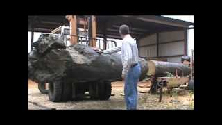 Old River Sawmill Reclaims 1828 City Mills Dam Timber.wmv