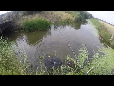 VLOG 3 CARP FISHING In A ( Sewer, Drainage System)