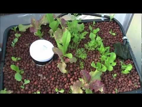 DIY BackYard Aquaponic OCT 2012-Beginners Aquaponics System