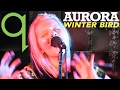 Aurora Winter Bird