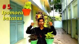 5-best-summer-months-hanging-basket-plants