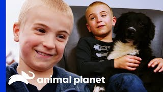 Meet The Boy On A Mission To Re-home Every Shelter Dog! | Dodo Heroes