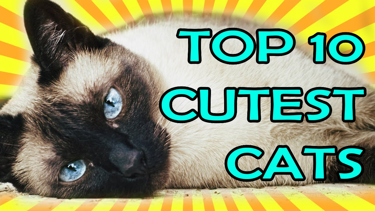 TOP 10 CUTEST CATS EVER!!