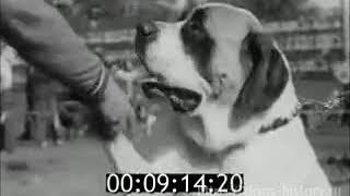 1979  Выставка собак (СССР,Ленинград)