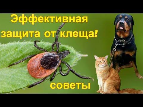 Капли барс от блох и клещей.Средство для защиты от клещей для кошек и собак.