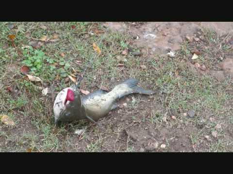 how to avoid catching catfish