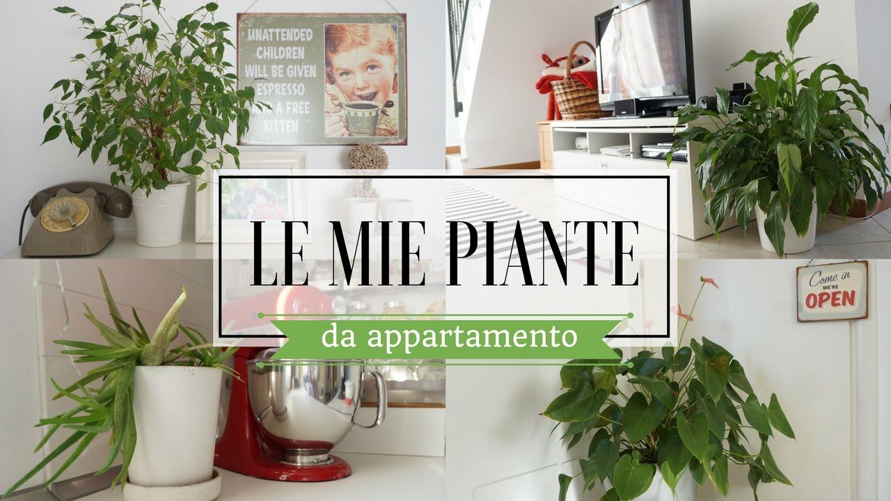 Piante Da Arredo Appartamento le mie piante da appartamento | l'angolo del focolare
