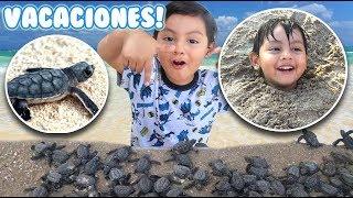 Vacaciones en la Playa   Liberamos Tortugas   Vlog en la Playa