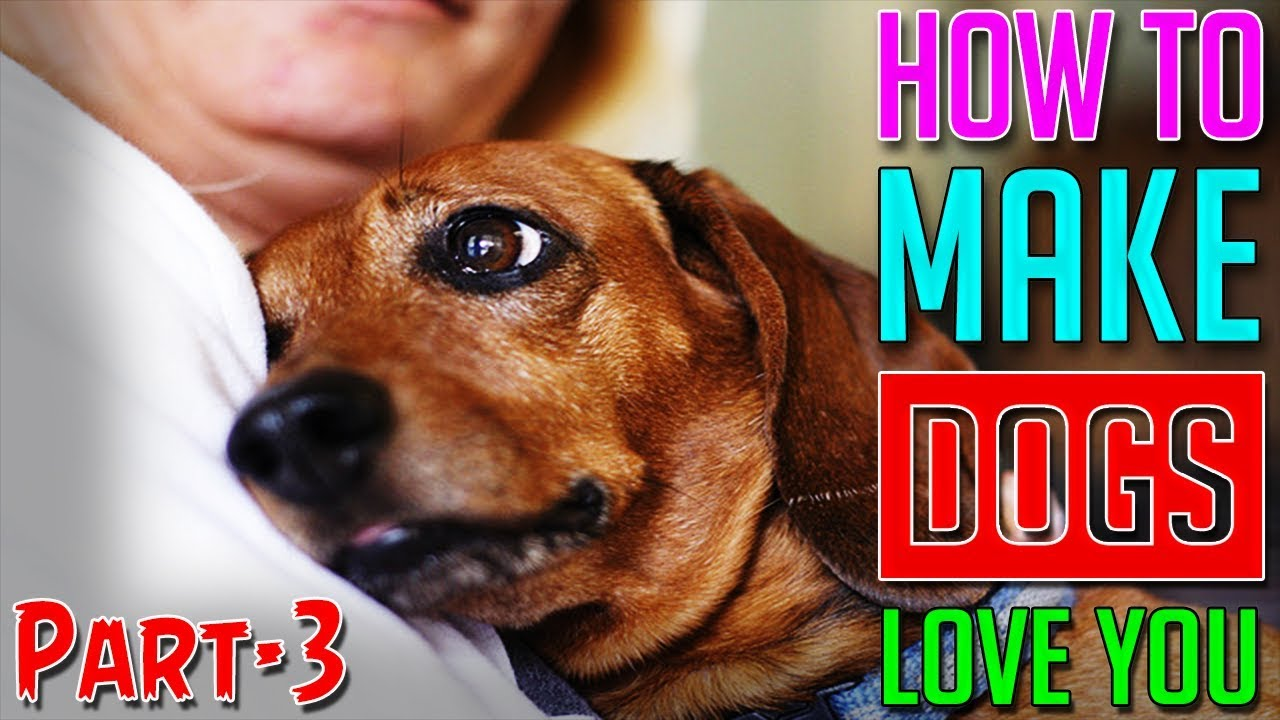 How to Make a Dog Love You