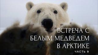 Встретить белого медведя в Арктике или полный писец. На Toyota по льду Карского моря. Часть 9