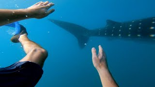 GoPro: Swimming with Whale Sharks | Philippines #TripOn