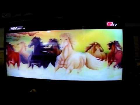 Năm ngựa nói chuyện ngựa O2 TV