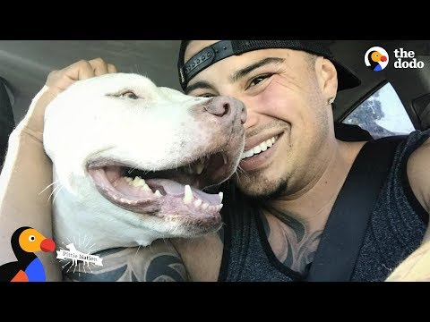 Guy Falls in Love With Pit Bull Dog So He Adopts Three More | The Dodo Pittie Nation
