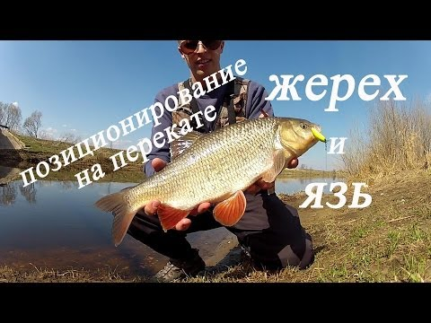 ловля язя на москве реке видео