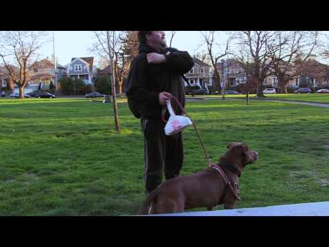 Dub Sack The Pitbull Colonel Summers Park Portland OR 2015
