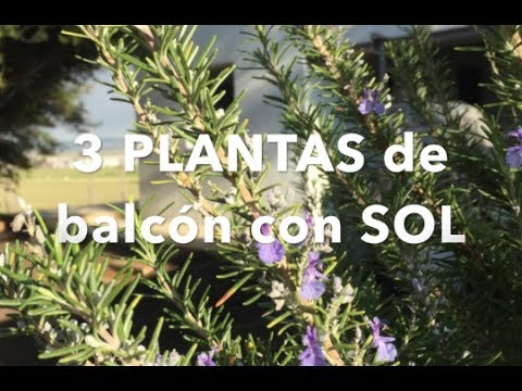 3 plantas para balc n con sol youtube. Black Bedroom Furniture Sets. Home Design Ideas