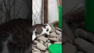 Кот крысолов👍