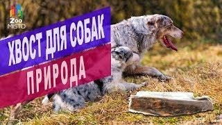 Лакомство для собак Хвост от компании Природа | Обзор лакомства Хвост для собак Природа